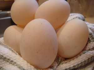 Fresh Duck Eggs